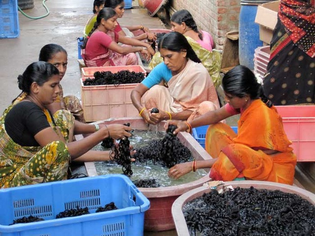 Một xưởng làm tóc giả, tóc nối tại Ấn Độ, nơi những mái tóc đang được giặt sạch qua trước khi xử lý. Mỗi ngày, các công nhân sẽ gỡ được 150g tóc/người.