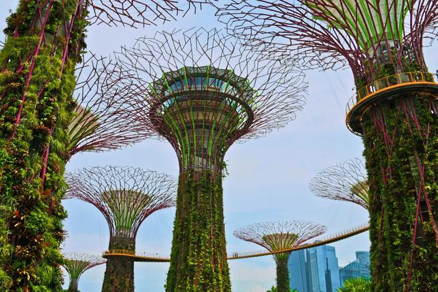 """""""Những khu vườn bên vịnh"""", điểm nhấn mới cho không gian xanh của Singapore."""