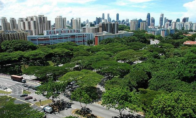 Singapore khiến cả thế giới ngưỡng mộ với hơn 50% đô thị được cây xanh bao phủ.
