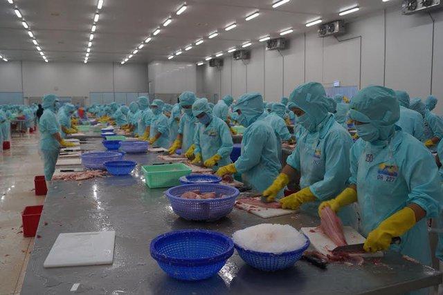 Nhu cầu nhập khẩu cá tra quý 4.2014 và quý 1.2017 dự báo sẽ tăng 20%