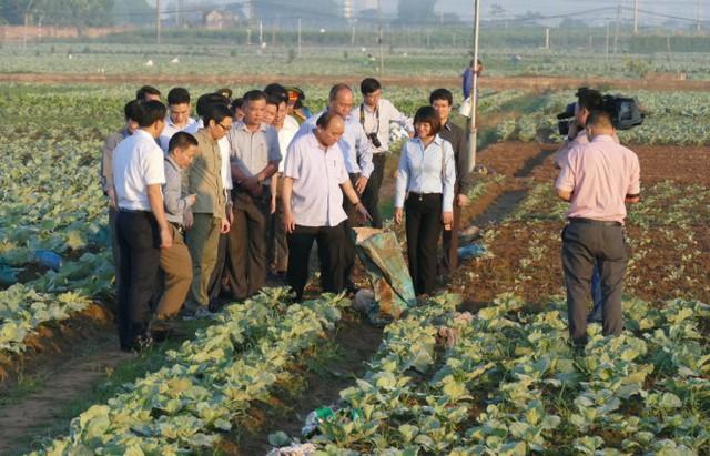 Với một tổ công tác rất gọn, không tiền hô hậu ủng, Thủ tướng đã bất ngờ gặp trực tiếp những người sản xuất để kiểm tra, thăm hỏi tình hình an toàn vệ sinh thực phẩm - Ảnh: LÊ KIÊN