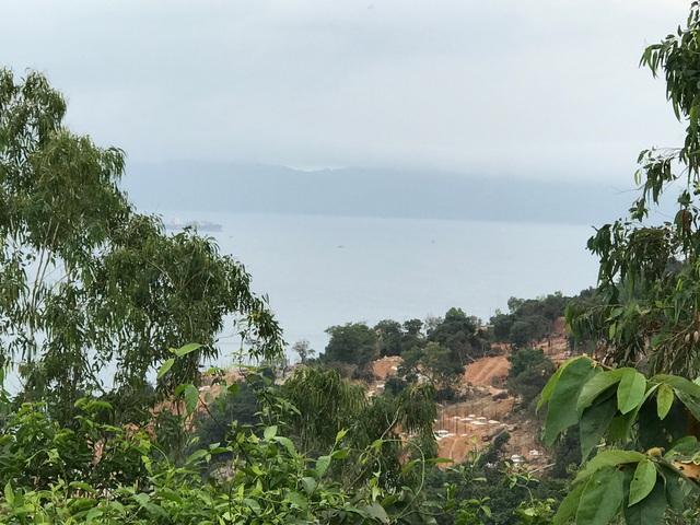 Hàng loạt cây cảnh cao lớn đang được trồng trên phần đất của dự án