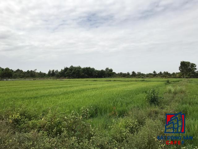 Phần lớn quỹ đất phát triển VinCity là đất canh tác của các hộ dân.