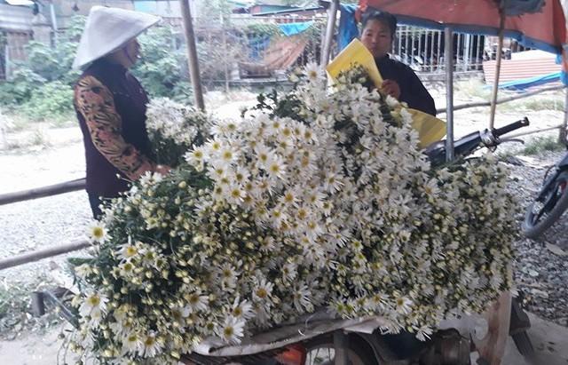 Cúc họa mi được người trồng hoa Tây Tựu thu hoạch và bày bán tại chợ đầu mối. Ảnh Tùng Anh.