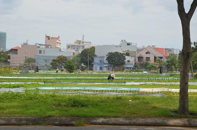 Bên trong khu đất đang được nhiều người dân tận dụng trồng rau và làm bãi giữ xe.