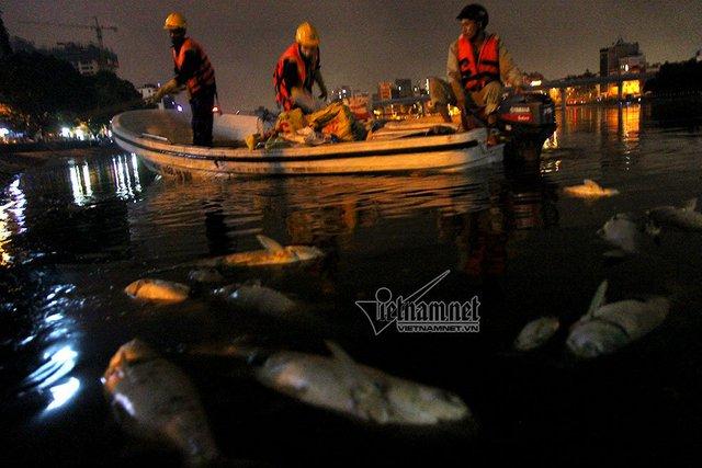 Công nhân vớt xác cá chết trong đêm tại hồ Hoàng Cầu. Ảnh: Phạm Hải