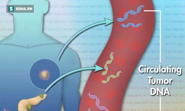 Các tế bào trong khối u khi chết sẽ giải phóng một lượng nhỏ ADN vào máu. Các đoạn ADN được gọi là ctDNA (cell-free circulating tumor DNA)