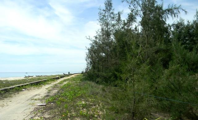 Các lô đất trồng cây lâu năm ven biển Tam Thanh được căng dây là của 1 nữ đại gia đã mua. Ảnh: V.T