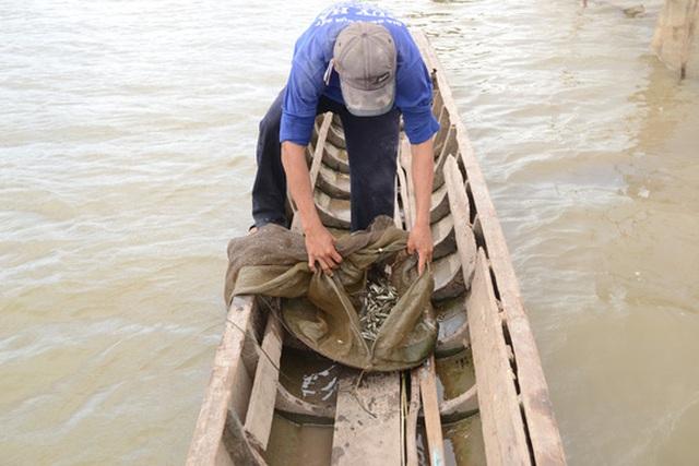 Tình trạng đánh bắt cá linh non đầu mùa lũ theo kiểu tận diệt ở An Giang đã giảm đáng kể sau khi tỉnh ban hành lệnh cấm