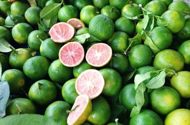 Giá chanh tươi phân phối ở vườn trên Ba Vì chỉ còn dao động 4.000 đồng/kg