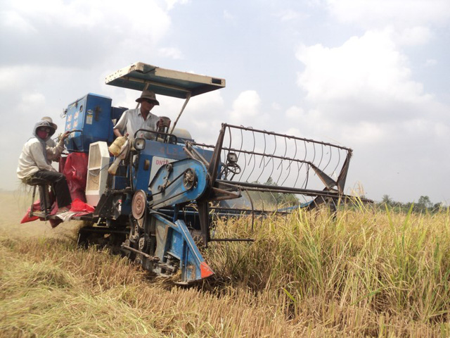 Hậu Giang ưu đãi và có cơ chế chính sách riêng cho DN đầu tư vào nông nghiệp, nông nghiệp ứng dụng công nghệ cao (ảnh GIA TUỆ)