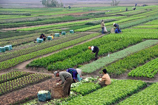 Việt Nam trước nguy cơ nhập khẩu giống cây trồng.