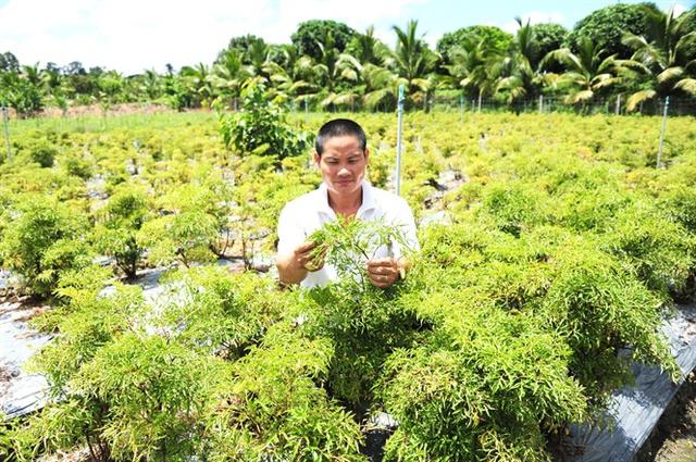 Thu tỷ đồng/năm từ trồng cây dược liệu ở Hồng Ngự - Ảnh 1.