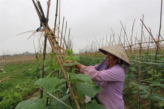 Bà Nguyễn Thị Tạo chăm sóc cây dưa