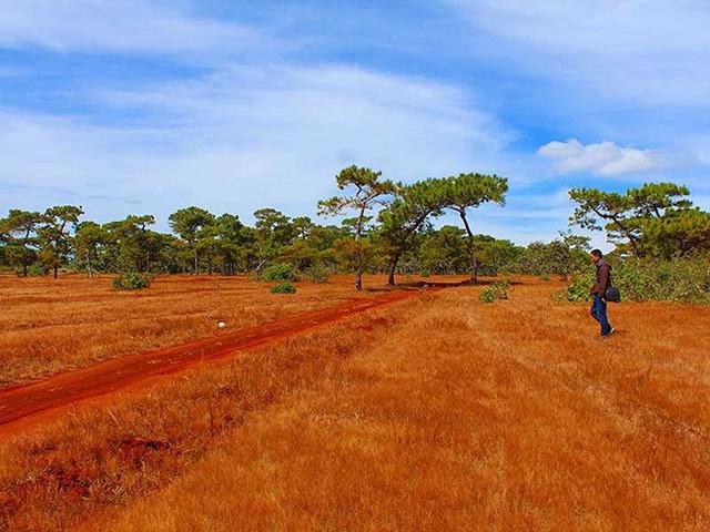 Dự án sân golf sẽ xóa sổ đồi cỏ hồng và rừng thông ở Gia Lai. Ảnh: BPN