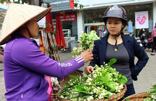 Hoa bưởi được hái từ sáng sớm tại Hòa Bình, Hưng Yên rồi chuyển về Hà Nội.