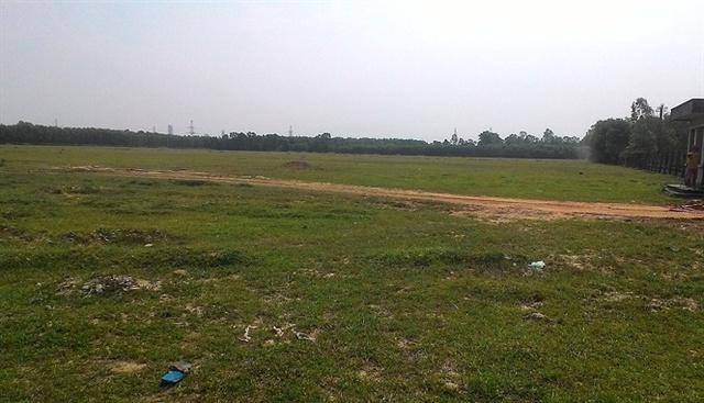 Hàng chục héc ta đất thành đồng cỏ chăn nuôi gia súc
