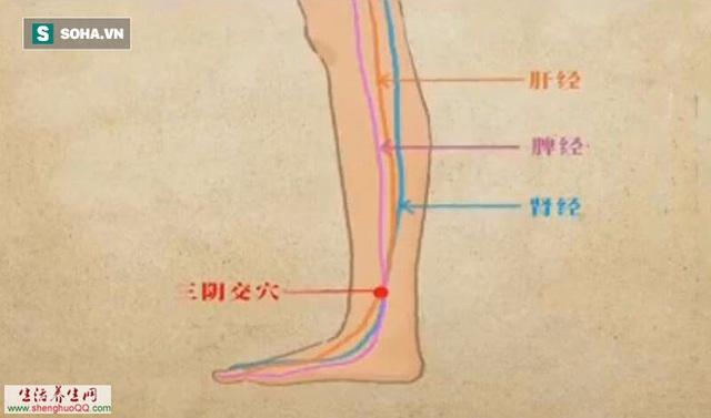 Huyệt tam âm giao là điểm gặp nhau giữa 3 đường kinh mạch của gan, lá lách, thận