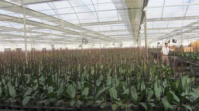 Nhà màng trồng lan hồ điệp của Viện Nghiên cứu Rau quả