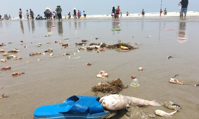 Cả rác cá, cua chết cũng dạt vào bãi biển. Ảnh: Quốc Huy
