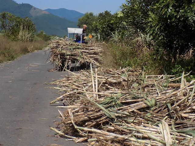 Toàn tỉnh Khánh Hòa có tổng diện tích gần 20.000 ha mía, sản lượng mía hàng năm hơn 1 triệu tấn.