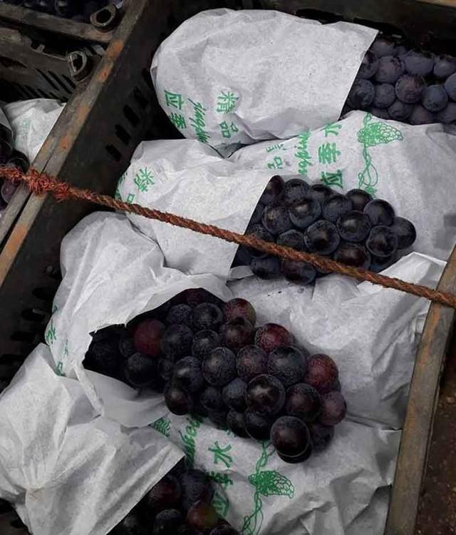 Dân buôn chợ đầu mối tiết lộ, loại nho Ninh Thuận bày bán tràn lan tại chợ là nho Trung Quốc đột lốt