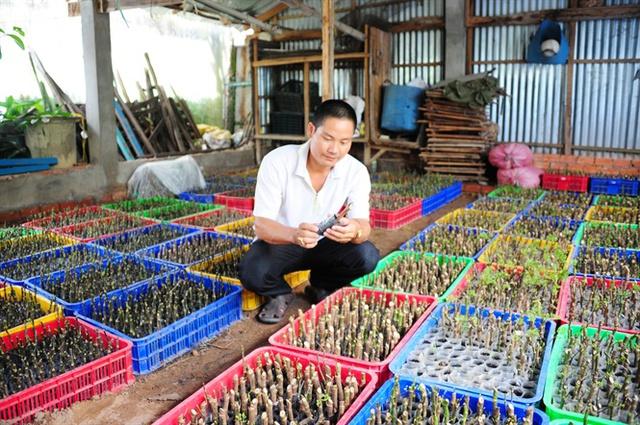 Thu tỷ đồng/năm từ trồng cây dược liệu ở Hồng Ngự - Ảnh 3.