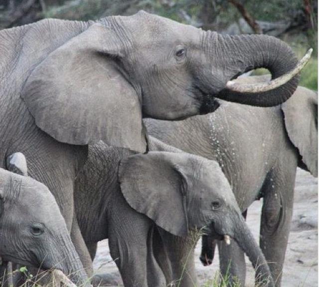 Hình ảnh của một số loài vật khác đôi khi cũng được ghi lại khi Alexandra thực hiện những chuyến du lịch vòng quanh thế giới, như bức ảnh của chú voi Châu Phi này chẳng hạn.