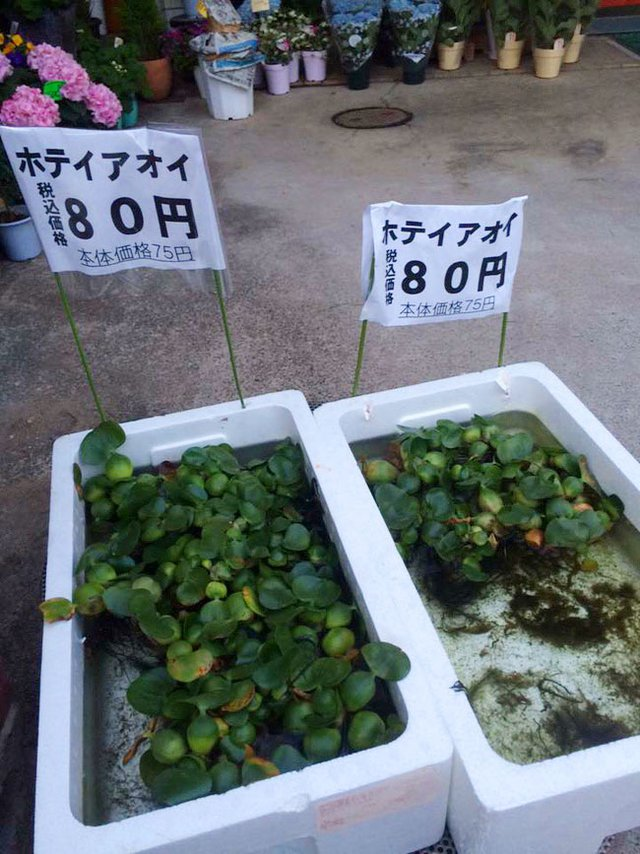 Bức ảnh thùng bèo được phân phối ở Nhật Bản. (Ảnh: Facebook)