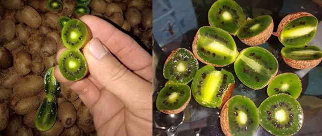 Kiwi rừng xuất hiện ở 1 số tỉnh vùng cao ở Việt Nam có kiểu dáng giống kiwi dâu