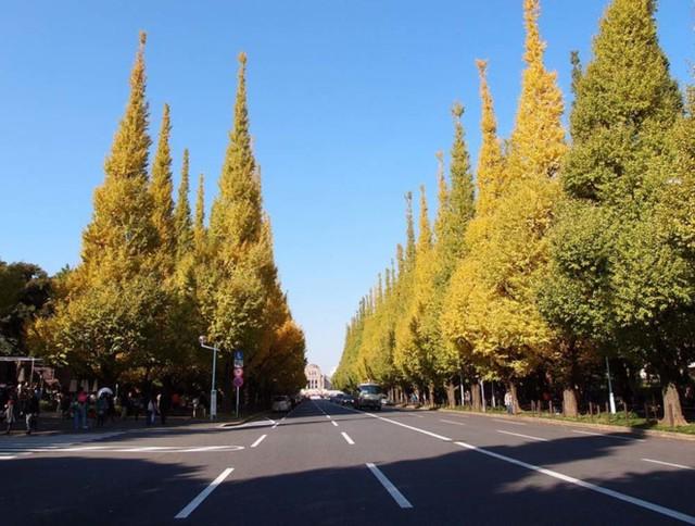 4. Tokyo. Mặc dù không rộng và ngoạn mục như các công viên quốc gia ở phía bắc, nhưng chắc chắn Tokyo sẽ thuận tiện hơn cho các du khách tham quan lá mùa thu tuyệt vời trong công viên như Rikugien hay Koishikawa Korakuen... Thời gian tốt nhất để xem lá ở Tokyo là từ cuối tháng Mười Một vào đầu tháng Mười Hai.