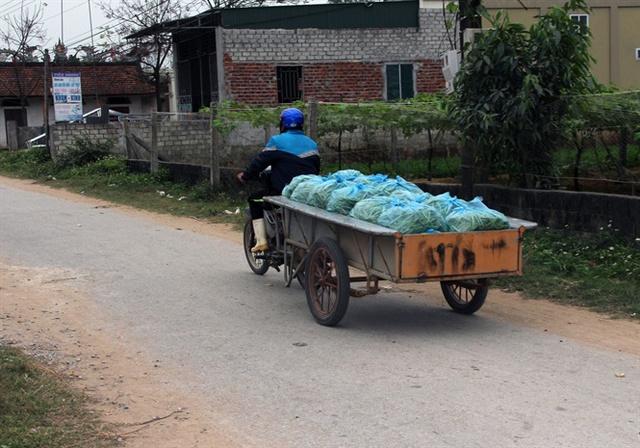 Nông dân phải chở đi các chợ trong vùng bán