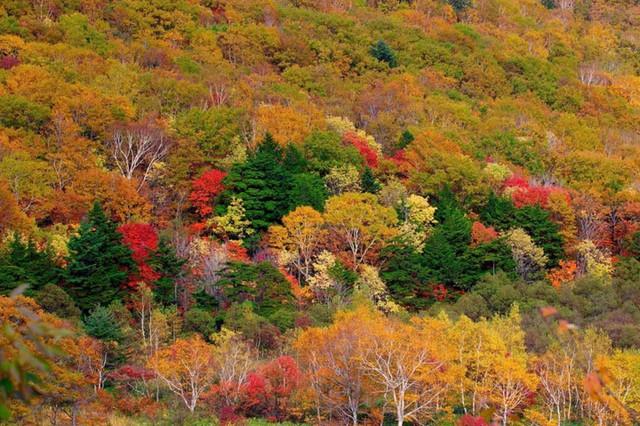 8. Cung đường Tateyama Kurobe Alpen. Một trong những cách mới mẻ để ngắm sắc thu của Nhật Bản là đi qua phong cảnh núi rừng của cung đường Tateyama Kurobe Alpen, nối thành phố Toyama với thành phố Omachi qua các chuyến tàu hỏa, cáp treo và xe buýt. Hãy ghé thăm bất kỳ thời gian nào từ cuối tháng 9 đến đầu tháng 11 và bạn sẽ thấy một số cảnh quan tuyệt đẹp ở một số điểm dọc theo tuyến đường.