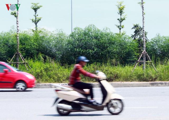 """Ảnh: Cỏ dại mọc rậm rạp như """"rừng"""" trên đường Hoàng Sa, Hà Nội  - Ảnh 5."""