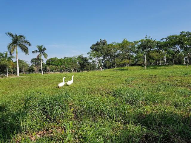 Dấu hiệu hồi sinh của các dự án tỷ USD ở Nhơn Trạch - Ảnh 4.