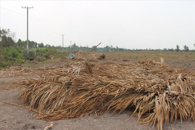 """Vụ """"10 triệu đồng 1.500m2 đất"""" ở Long An: Nhiều người tiếp tục bị lừa - Ảnh 1."""