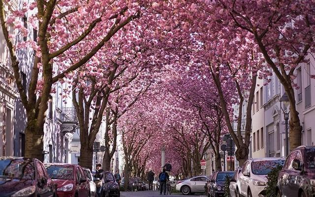 21 con đường mang vẻ đẹp lãng mạn, quyến rũ nhất thế giới - Ảnh 14.