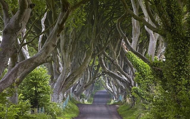 21 con đường mang vẻ đẹp lãng mạn, quyến rũ nhất thế giới - Ảnh 16.