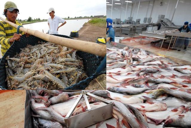 Bộ Nông nghiệp: Đẩy mạnh sản xuất cá tra, tôm vào cuối 2018 để nắm bắt cơ hội - Ảnh 1.