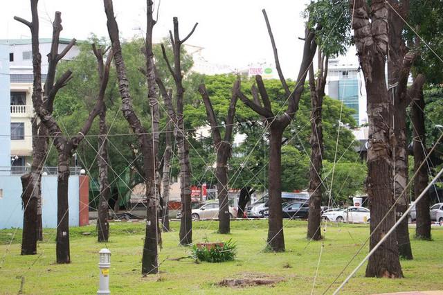 Đường đi của các loại cây xanh bị đốn hạ ở TP HCM - Ảnh 2.