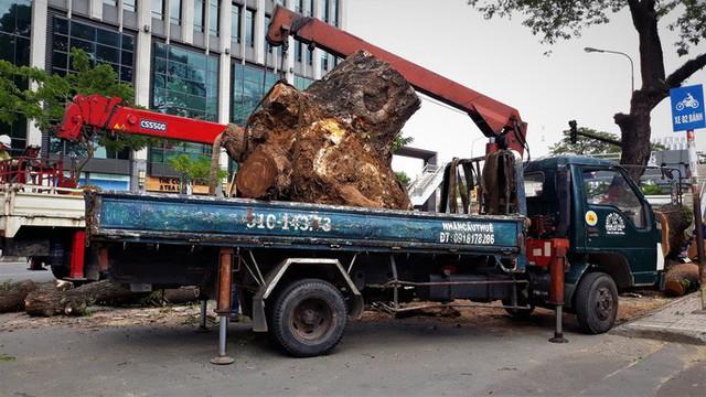 Đường đi của các loại cây xanh bị đốn hạ ở TP HCM - Ảnh 7.