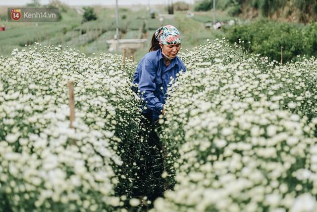 Cúc hoạ mi vào vụ mùa, nông dân Hà Nội hớn hở chào mừng khách đến mua hoa và chụp ảnh - Ảnh 11.