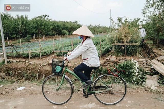Cúc hoạ mi vào vụ mùa, nông dân Hà Nội hớn hở chào mừng khách đến mua hoa và chụp ảnh - Ảnh 12.