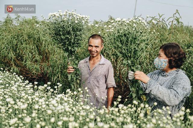 Cúc hoạ mi vào vụ mùa, nông dân Hà Nội hớn hở chào mừng khách đến mua hoa và chụp ảnh - Ảnh 13.