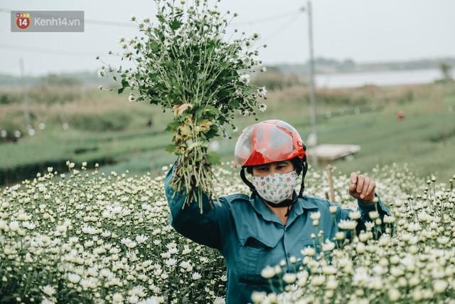 Cúc hoạ mi vào vụ mùa, nông dân Hà Nội hớn hở chào mừng khách đến mua hoa và chụp ảnh - Ảnh 4.
