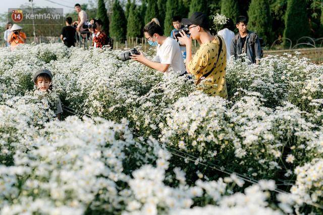 Vườn cúc hoạ mi ở Hà Nội thất thủ cuối tuần: 1 mét vuông có chục nhiếp ảnh gia và mẫu - Ảnh 23.