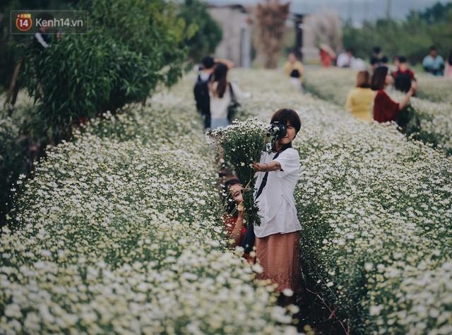 Vườn cúc hoạ mi ở Hà Nội thất thủ cuối tuần: 1 mét vuông có chục nhiếp ảnh gia và mẫu - Ảnh 24.