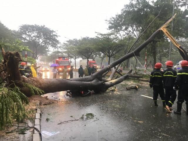 Gần 100 cây xanh ngã đổ, 3 người bị đè thương vong ở TP.HCM - Ảnh 1.
