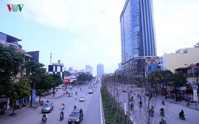 Hàng cây phong ở Hà Nội trơ cành, khô héo ngay đầu mùa đông - Ảnh 1.