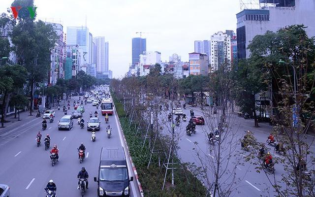 Hàng cây phong ở Hà Nội trơ cành, khô héo ngay đầu mùa đông - Ảnh 2.
